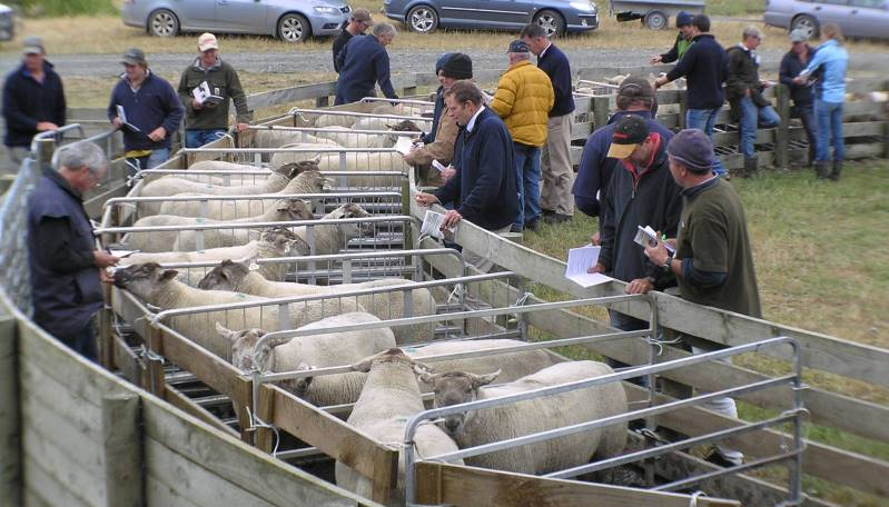 Suftex sales rams ready to go